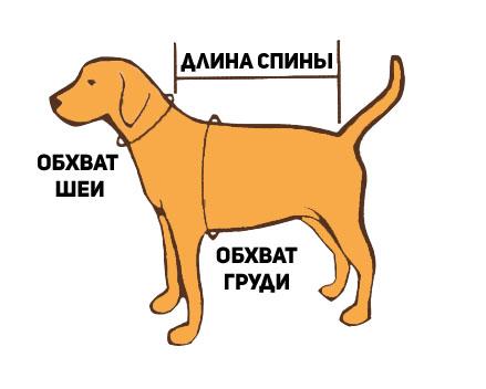 как измерить собаку